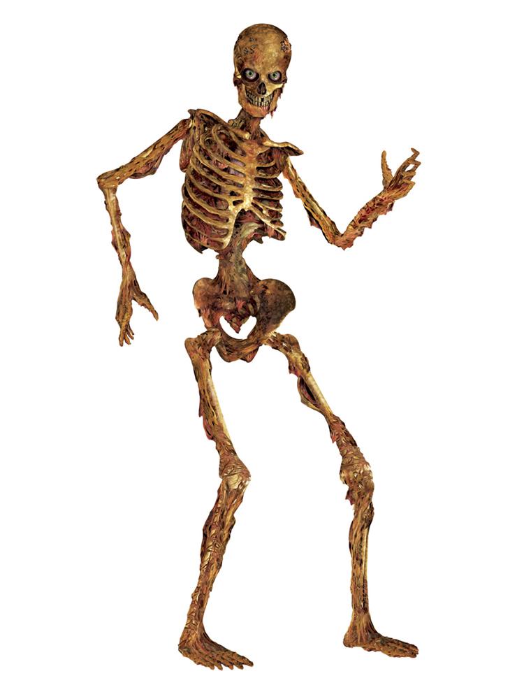 Jointed Skeleton 6'