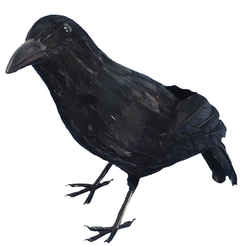Crow Feathered, Black