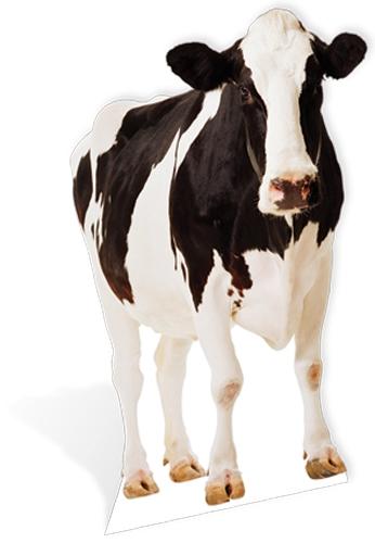 Cow - Cardboard Cutout