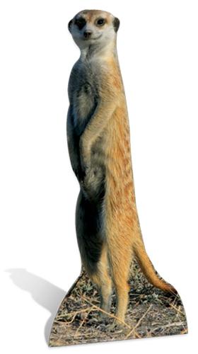 Meerkat - Cardboard Cutout