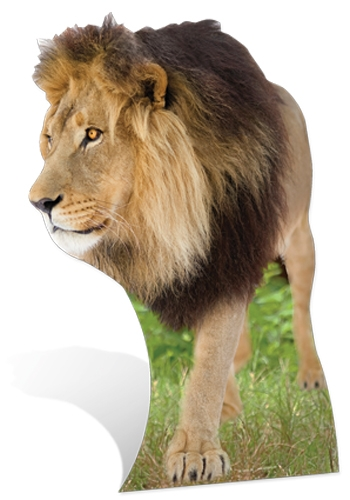 Lion Cardboard Cut-out