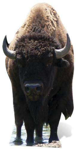 Bison (Buffalo) - Cardboard Cutout