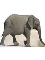 Baby Elephant Cardboard Cutout