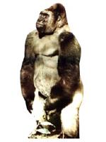 Gorilla Cardboard Cutout
