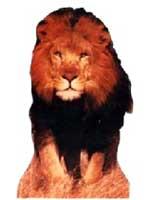 Lion Cardboard Cutout