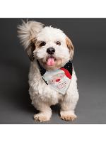 Personalised Santa Dog Bandana