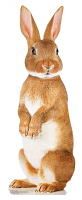 Cute Rabbit - Cardboard Cutout