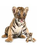 Bengal Tiger Cub Sitting Star Mini Cardboard Cutouts