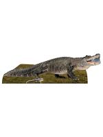 Fresh Water American Alligator Animal Cardboard Cutout