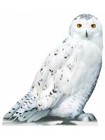 Hedwig Star Mini Harry Potter Cardboard Cutout