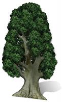 Tree - Cardboard Cutout
