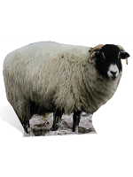 Sheep Cardboard Cutout