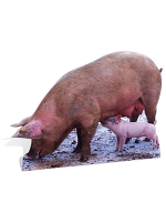 Pig and Piglet - Cardboard Cutout