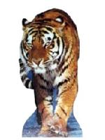 Tiger Cardboard Cutout